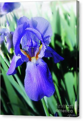 Blue Iris 2 Canvas Print