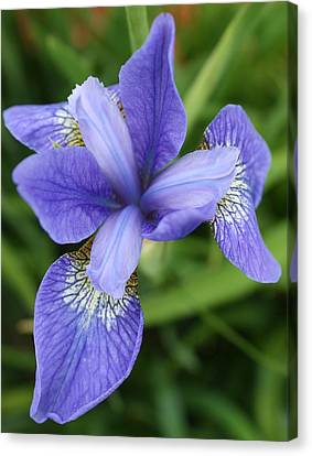 Blue Iris 5 Canvas Print by Bruce Bley
