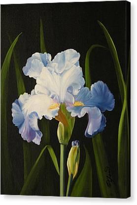 Blue Iris Canvas Print by Joni McPherson