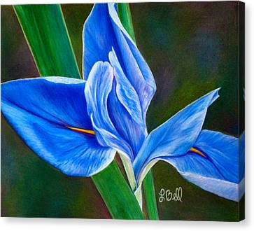 Blue Iris Canvas Print by Laura Bell