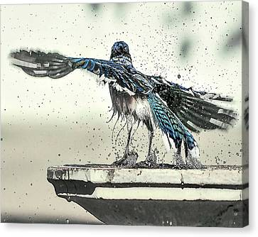 Blue Jay Bath Time Canvas Print