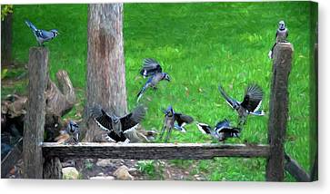 Canvas Print - Blue Jay Convention by Dan Friend