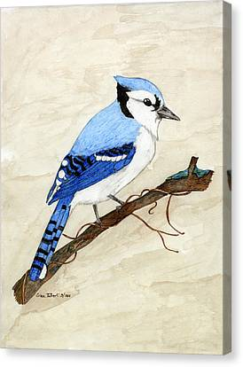 Bluejay Canvas Print - Blue Jay by Erica Tolbert
