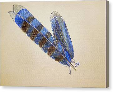 Bluejay Canvas Print - Blue Jay Feathers by J R Seymour