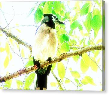 Canvas Print featuring the photograph Blue Jay IIi by Clarice  Lakota