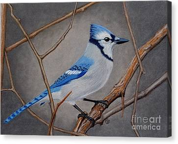 Bluejay Canvas Print - Blue Jay In Thicket by Sherry Goeben