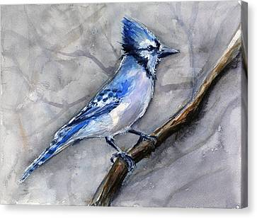 Blue Jay Watercolor Canvas Print by Olga Shvartsur