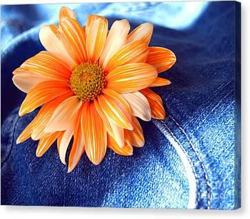 Blue Jeans And Daisies Canvas Print by Wendy Mogul