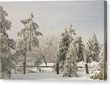 Blue Knob Winter Canvas Print by Lois Bryan
