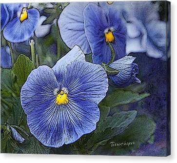 Blue Ladies Canvas Print by Terri Harper
