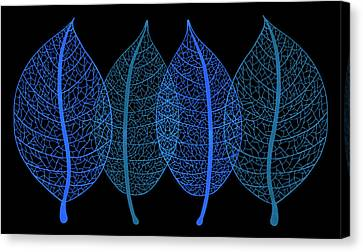 X-rays Of Canvas Print - Blue Leaves by Frank Tschakert