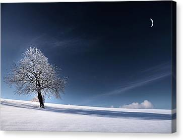 Blue Like Snow Canvas Print by Philippe Sainte-Laudy