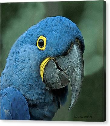 Blue Macaw 2 Canvas Print