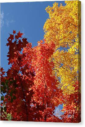 Blue Maple Canvas Print by The Stone Age