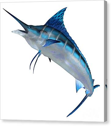 Blue Marlin Front Profile Canvas Print by Corey Ford