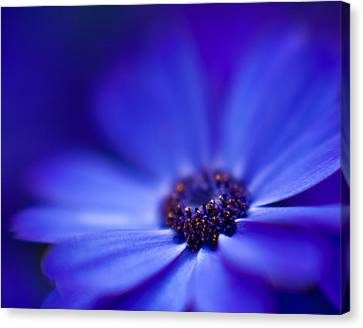 Blue Canvas Print by Mike Reid