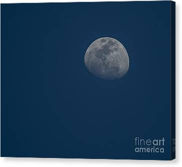 Blue Moon Canvas Print by D Wallace