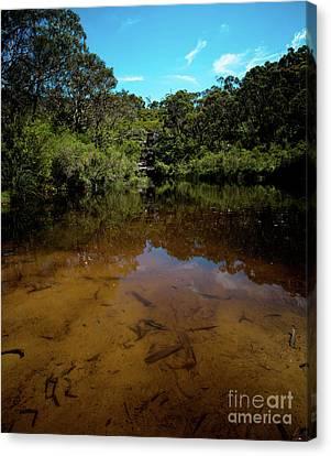 Blue Mountains Waterhole Ingar Lake Canvas Print by John Buxton