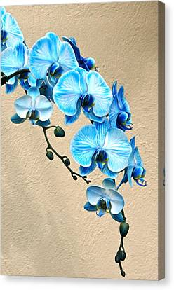 Blue Mystique Orchid Canvas Print