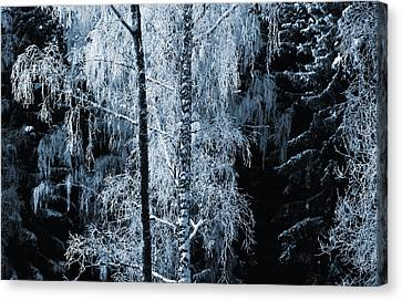 Blue Nature Winter Scenery Canvas Print by Christian Lagereek