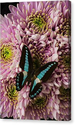 Blue On Pink Canvas Print by Garry Gay