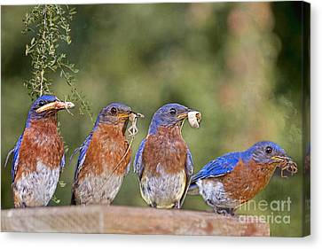 Blue Plate Lunch Special Canvas Print by Bonnie Barry