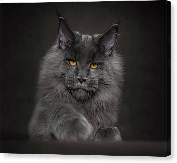 Canvas Print featuring the photograph Blue Prince by Robert Sijka