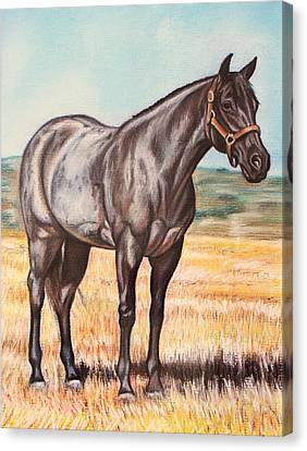 Blue Quarter Horse Canvas Print by Lucy Deane