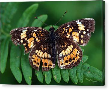 Canvas Print featuring the photograph Blue Ridge Butterfly by Kay Lovingood