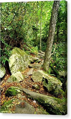 Canvas Print featuring the photograph Blue Ridge Parkway Hiking Trail by Meta Gatschenberger