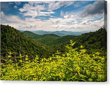 Blue Ridge Parkway Nc Summer Flowers Canvas Print