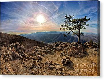 Blue Ridge Rocky Hilltop And Tree At Sunset Canvas Print by Dan Carmichael