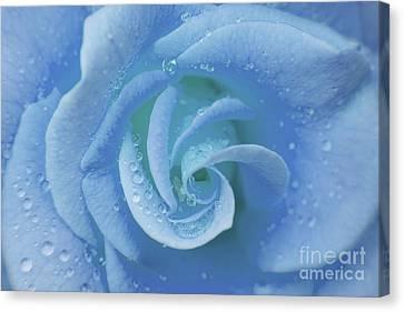 Blue Rose Canvas Print by Julia Hiebaum
