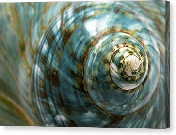 Blue Seashell Canvas Print by Fabrizio Troiani