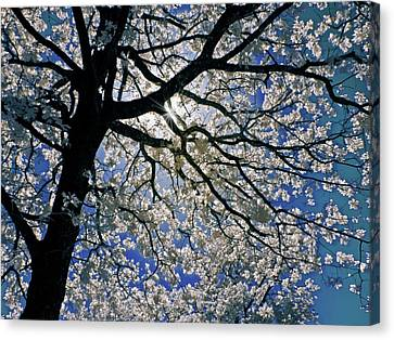 Canvas Print featuring the photograph Blue Skies Smiling At Me by Linda Unger