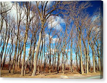 Canvas Print featuring the photograph Blue Sky And Trees by Valentino Visentini