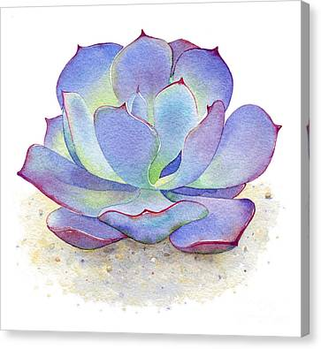 Blue Sky Succulent Canvas Print