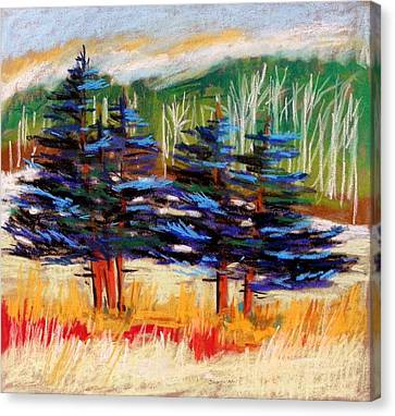 Blue Spruce Stand Canvas Print by John Williams