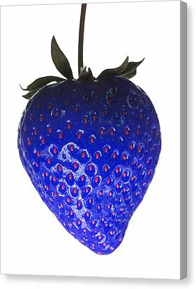 Blue Strawberry Canvas Print by Tim Booth