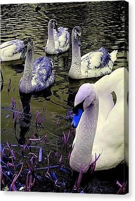 Blue Swan Canvas Print
