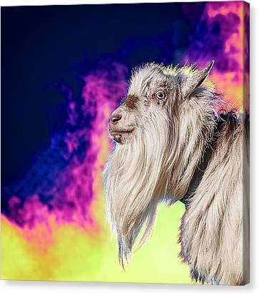 Blue The Goat In Fog Canvas Print by TC Morgan