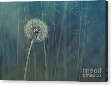 Meadow Canvas Print - Blue Tinted by Priska Wettstein
