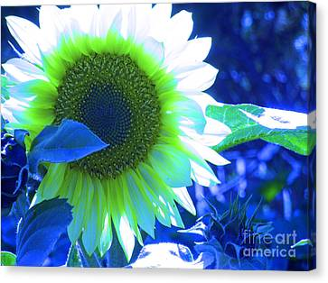 Blue Tinted Sunflower Canvas Print by Sonya Chalmers