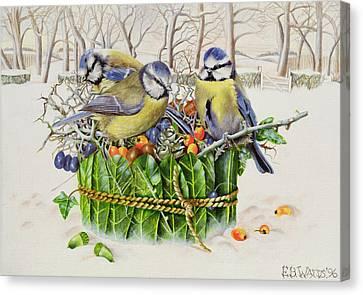 Blue Tits In Leaf Nest Canvas Print