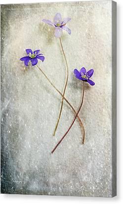 Blue Trio Canvas Print by Randi Grace Nilsberg