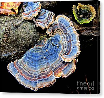Blue Turkeytail Fungi Canvas Print by Joshua Bales