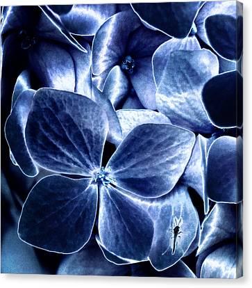 Blue Velvet Canvas Print by Darlene Kwiatkowski