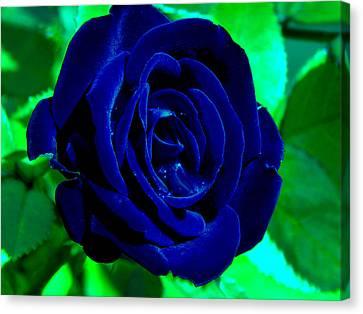 Blue Velvet Rose Canvas Print