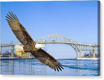 Blue Water American Bald Eagle Canvas Print