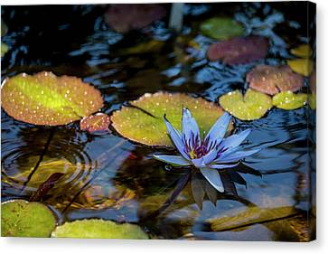 Blue Water Lily Pond Canvas Print